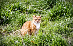 Gastric or intestinal tumors in cats