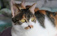 Gatti lontani dai mobili: come fare ad abituarli?