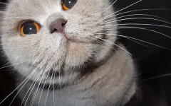 Biscottini al fegato per gatti: ricetta gustosa per Micio