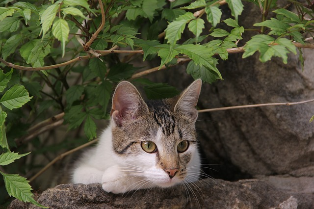 Pancreatitis in Cats: causes, symptoms and treatment