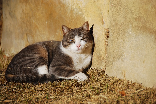 Heartworm infection in cats: causes, symptoms and treatment
