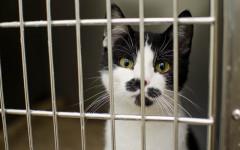 Trampas para gatos: ¿cosa del pasado?