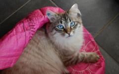 Whiskas gatti: linee di prodotti per Micio