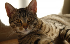 Blood in vomit in cats - What are the causes and what to do