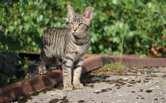 Bronchite nel gatto: cause e sintomi della patologia felina