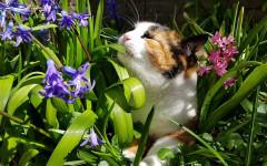 Piante amate dai gatti