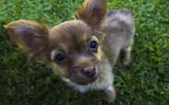Mi perro vomita espuma blanca: ¿cómo ayudarlo?