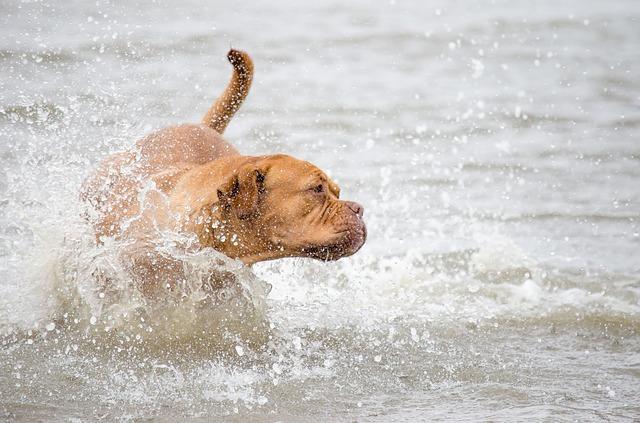 Spiagge per cani Campania e spiagge per cani Basilicata