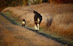 Punture di zecca su cani e gatti: che fare? Come proteggerli?