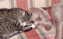 Ascorbato di potassio contro i tumori nel cane e nel gatto