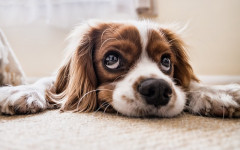 Colitis in dogs: Causes, symptoms and treatment