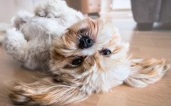 Hoteles que admiten perros: un gran confort
