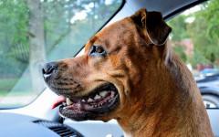 Capire età del cane dai denti, come fare?