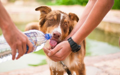 Dehydration in dogs: symptoms, treatment and prevention