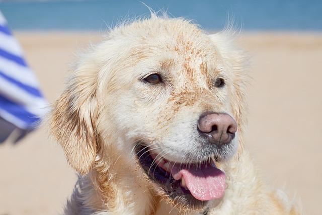 Spiagge per cani Puglia: mete estive petfrienldy