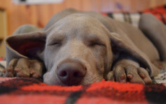 Lethargy in dogs: what could be causing it and what to do