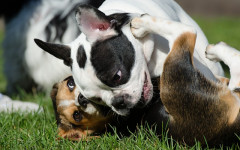 Socializzazione del cucciolo: cosa c'è da sapere