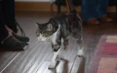 Gatta torna a casa dopo 13 anni: la storia di Boo