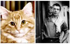 Gatti famosi nella storia: tutte le curiosità