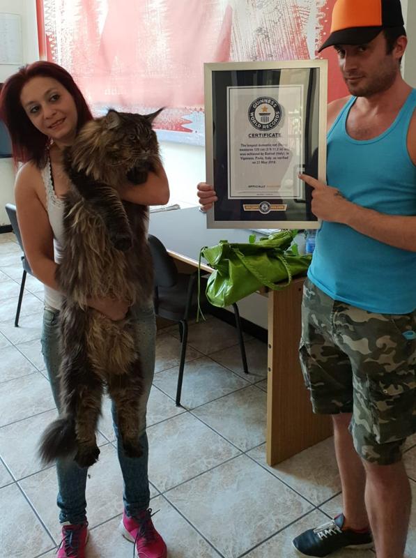 Barivel, il gatto più lungo del mondo