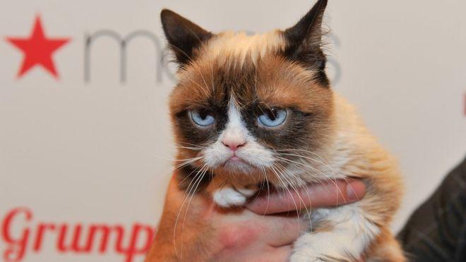 Gatti famosi nella storia Grumpy Cat