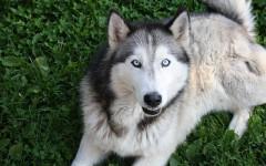 Friskies cani: cibo secco, umido e snack per Fido