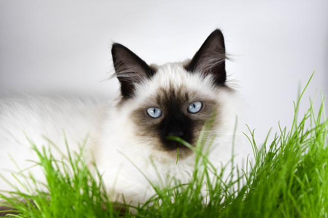 Colitis in cats: causes, symptoms and treatment