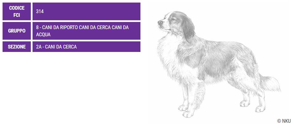 Kooikerhondje, carattere e prezzo - Razze cani