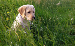 Quitar garrapata perro, como hacerlo para su cuidado