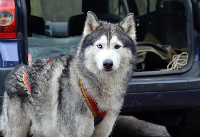 Muda pelo perro: lo que se debe saber de esa época