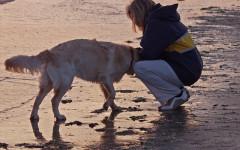 Spiagge per cani Sicilia: vacanze con il peloso di casa
