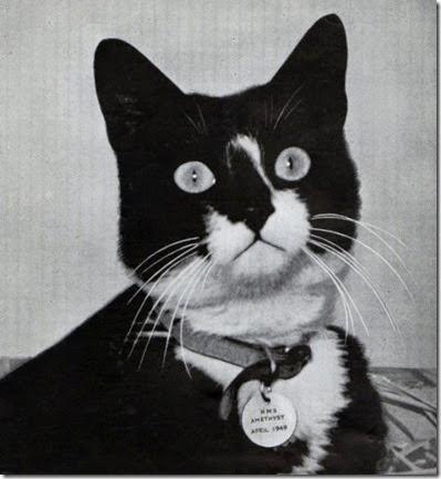Gatti famosi nella storia Oscar