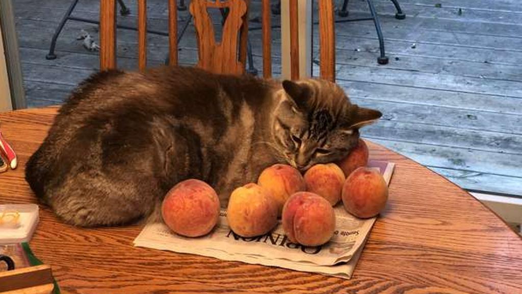 Gatto ama pesche: Ozzy fa impazzire il web