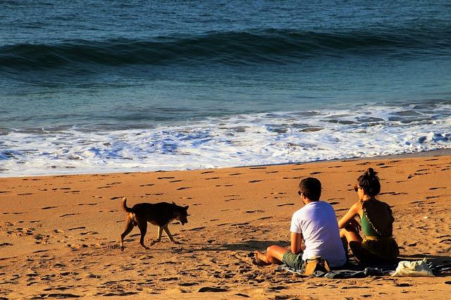 Spiagge per cani Calabria: mete per tutti i gusti
