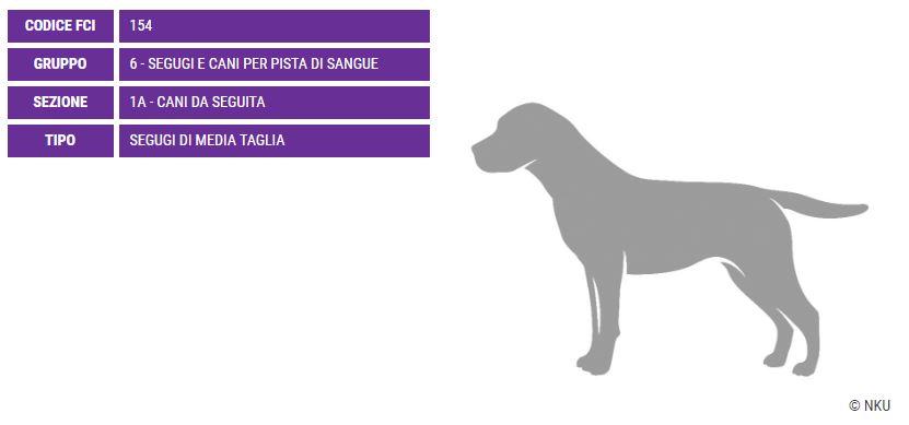 Segugio posavats, carattere e prezzo - Razze cani