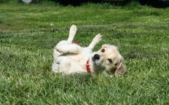 Insegnare al cane a rotolare, più semplice di quanto pensi!