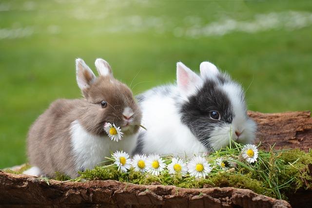 Lettiera per conigli: come insegnargli a utilizzarla?