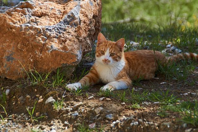 Gatti impazziscono per le olive, come mai?