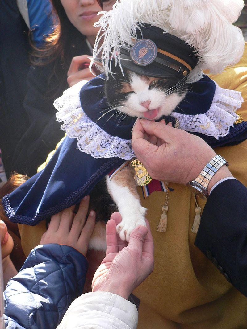Gatti famosi nella storia Tama
