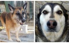 Tecla e Maya cercano casa: appello per adozione