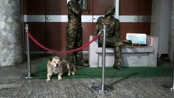 Addio al cane del tribunale che vegliava Falcone e Borsellino