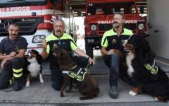 Cani eroi tra le macerie della tragedia di Genova