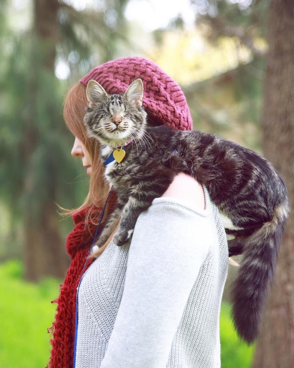 Gatto nato cieco ha trovato una vita felice e fa ogni cosa