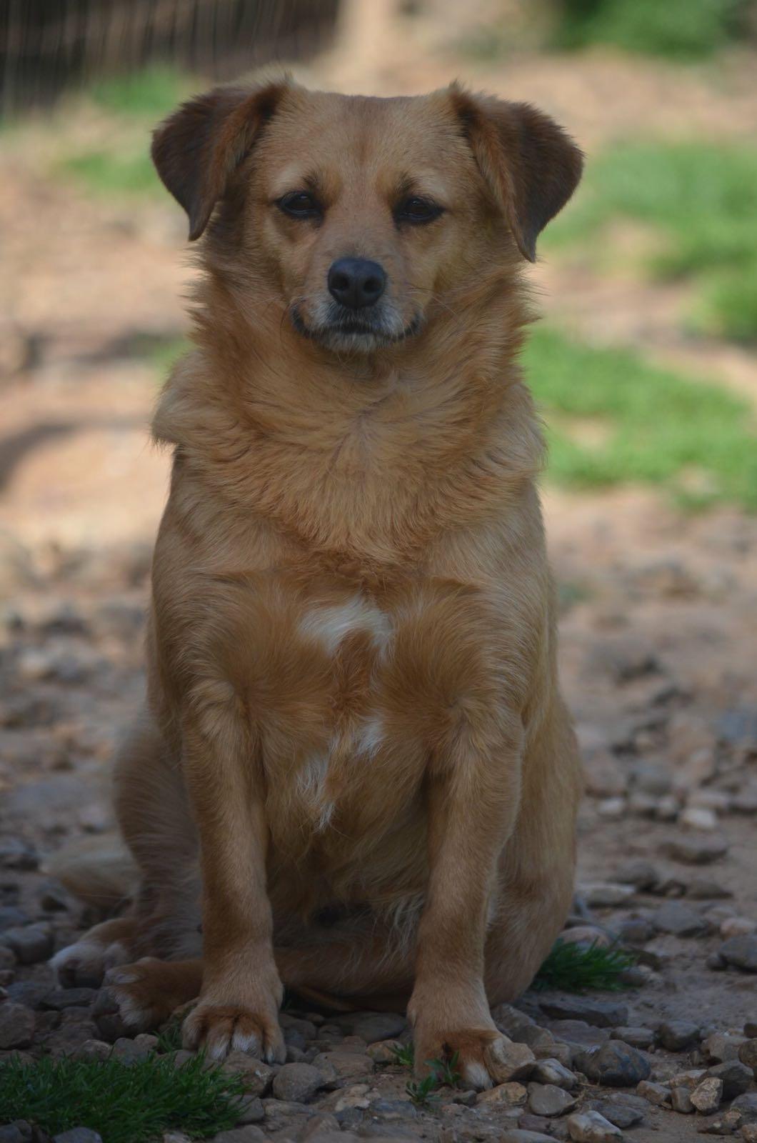 Lola cerca casa, aiutiamola! Appello per adozione