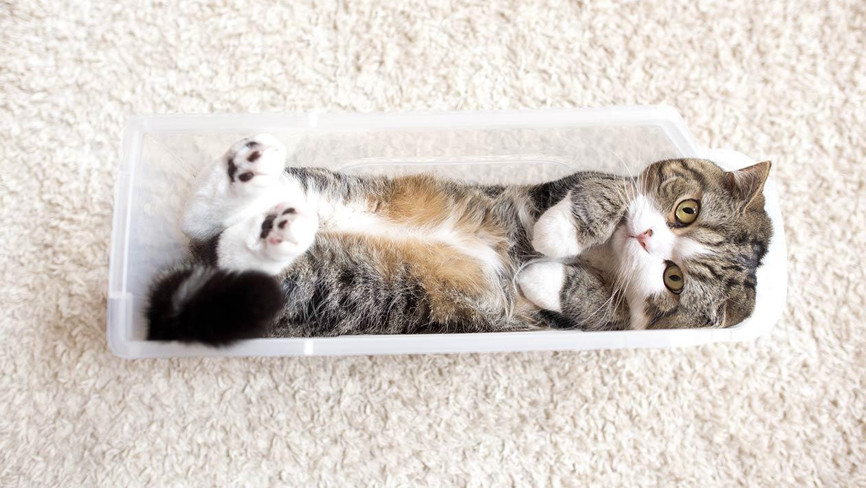 Maru the cat: il gatto più buffo del web!