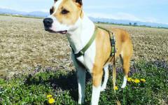Kira cerca casa, aiutiamola: appello per adozione