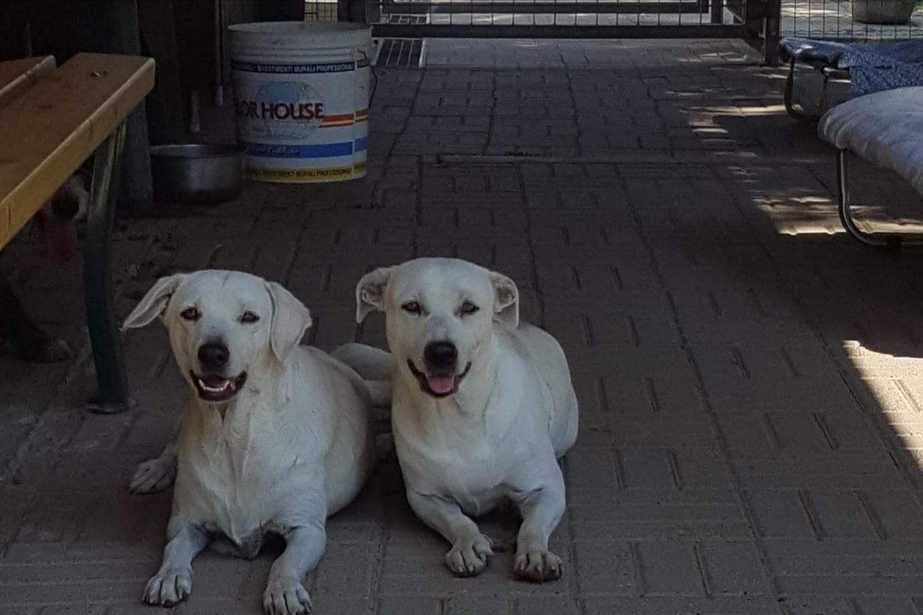 Bianca e Neve cercano casa, appello per adozione