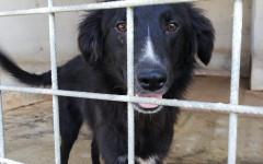 Bianca cerca casa, aiutiamola! Appello per adozione