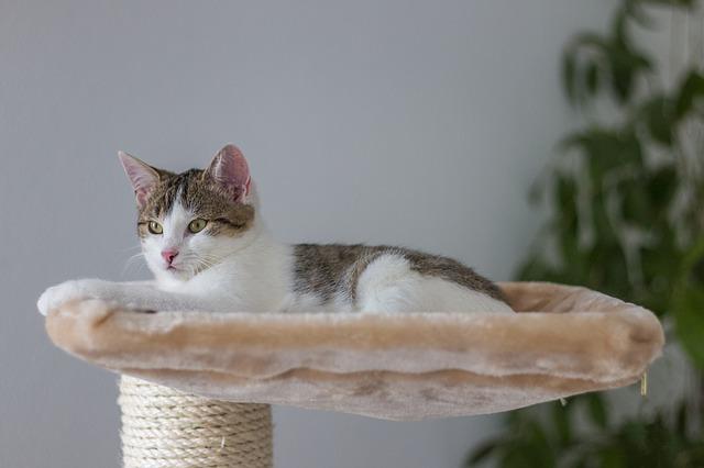 Adottare un gatto allunga la vita: i felini fanno bene alla salute