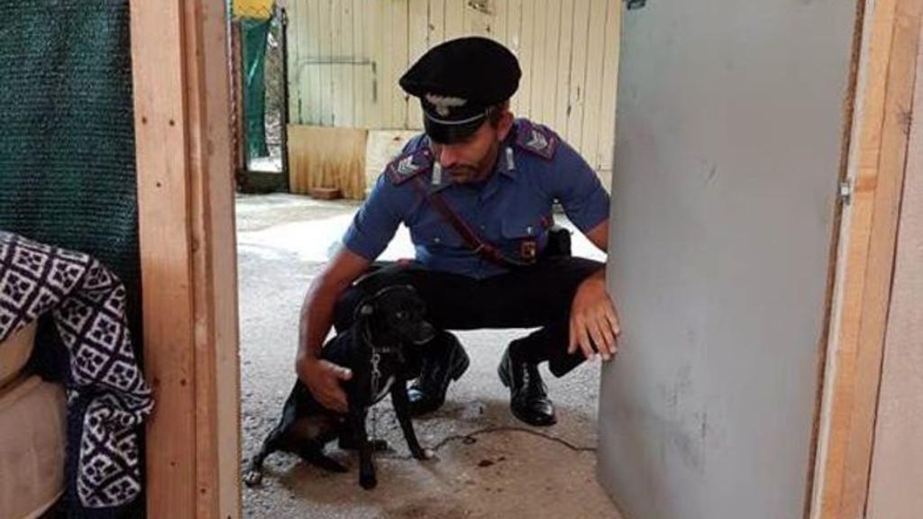 Abbandona il cane in cortile e torna in Moldavia